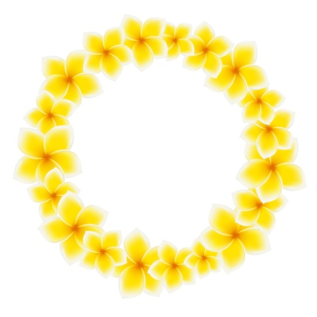 bali: Circle of Frangipani flowers. Asian yellow flower. Vector illustration on white background Illustration