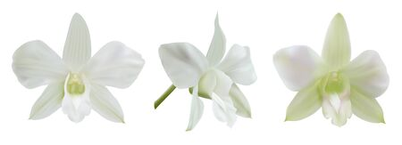 White orchid flowers isolated on white background (different angles). Vector illustration for decoration wedding or holiday invitation card