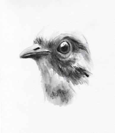 tweets: bird 1