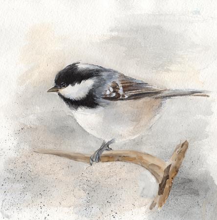 1: bird titmouse 1