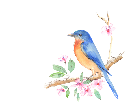 Small bird on branch. Watercolor illustration
