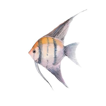 scalar: Scalar. Watercolor fish. Vector illustration