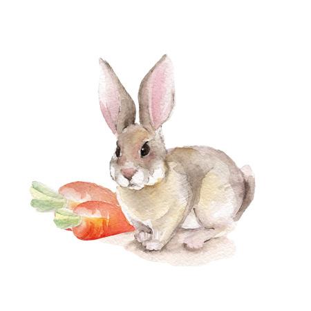 Lapin et les carottes. Vector illustration