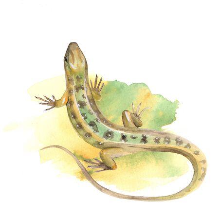 lagartija: Lagarto. Ilustración de la acuarela Foto de archivo