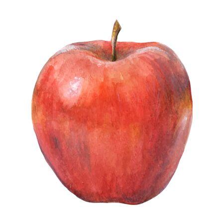 cognition: Watercolor apple 2. Vector illustration