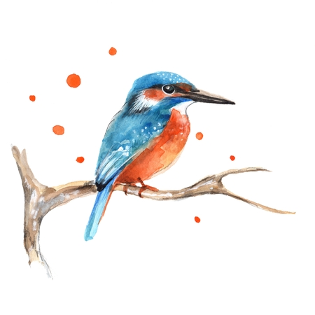 Kingfisher on branch 1