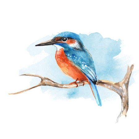 ornithology: Kingfisher on branch 2 Stock Photo