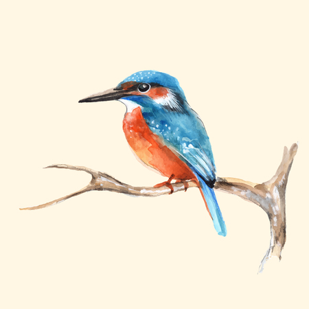 Kingfisher on branch. Vector illustration