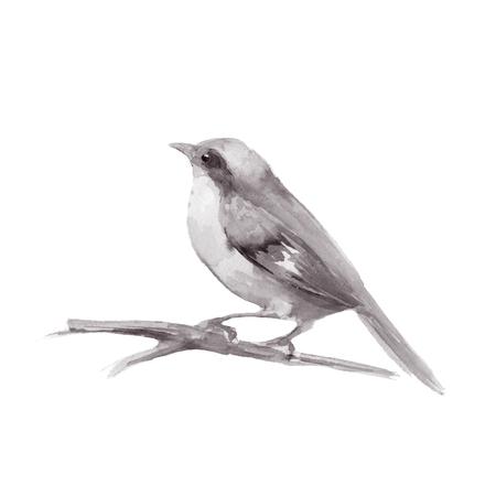 ornithology: Cute watercolor bird. Hand drawn illustration 2