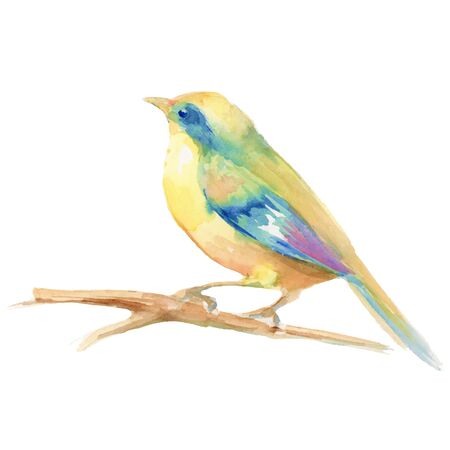 ornithology: Cute watercolor bird. Hand drawn illustration in vector Illustration