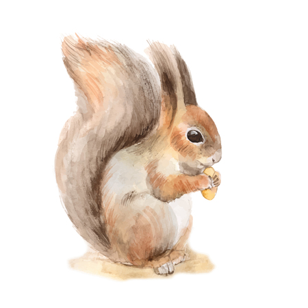 Squirrel with a nut. Hand drawn. Watercolor illustration in vector