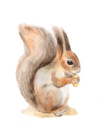 Eichhörnchen mit einer Nuss. Aquarell-Illustration