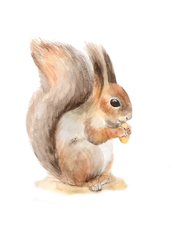 isolated squirrel: Squirrel with a nut. Watercolor illustration Stock Photo