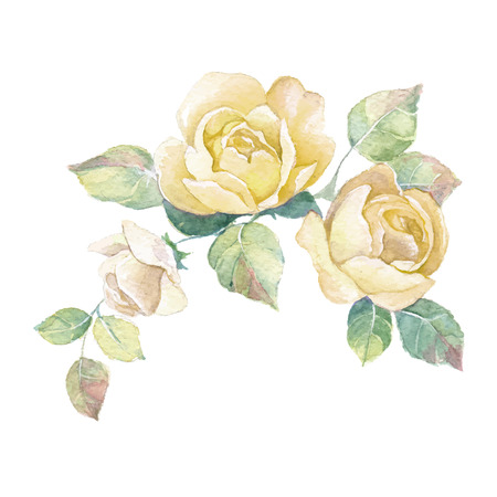 roses petals: Floral branch Illustration