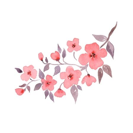 Cherry blossom. Hand drawn watercolor illustration 1