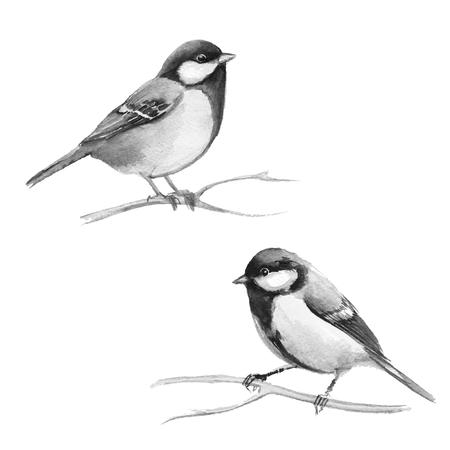 titmouse: Cute small bird. Watercolor titmouse set Stock Photo