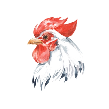 Rooster 2. Hand drawn watercolor illustration