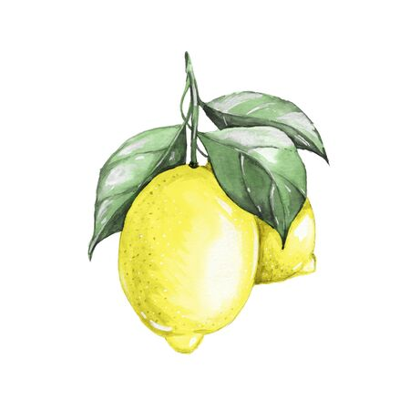citrus tree: Lemons. Watercolor illustration. Isolated on white Stock Photo