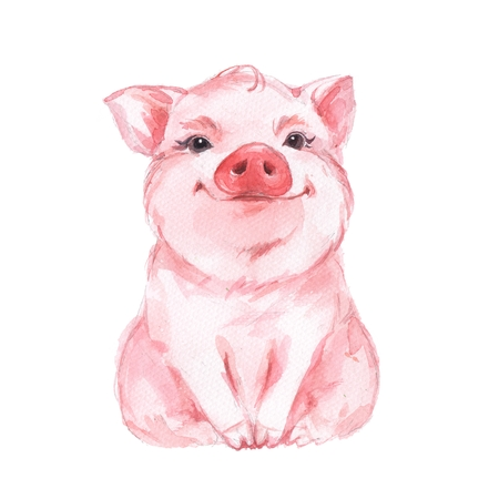 Funny pig. Cute watercolor illustration