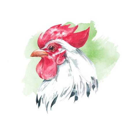 Rooster 2. Watercolor illustration
