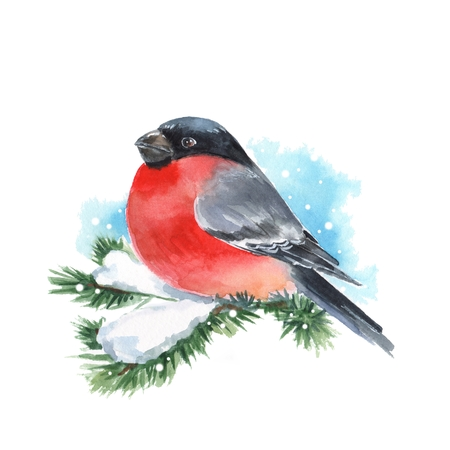 Bullfinch and snow. Bird on branch. Watercolor painting