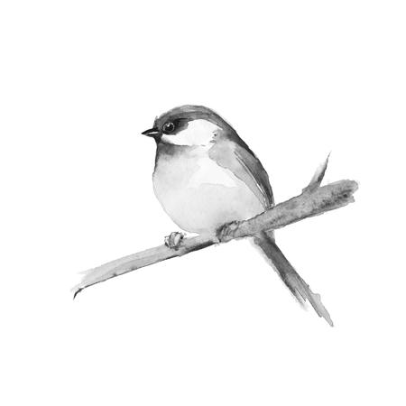 Petit oiseau sur la branche. peinture noire et blanche aquarelle.