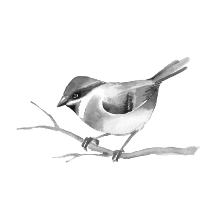 Bird on branch. Watercolor painting. Black and white illustration. Isolated