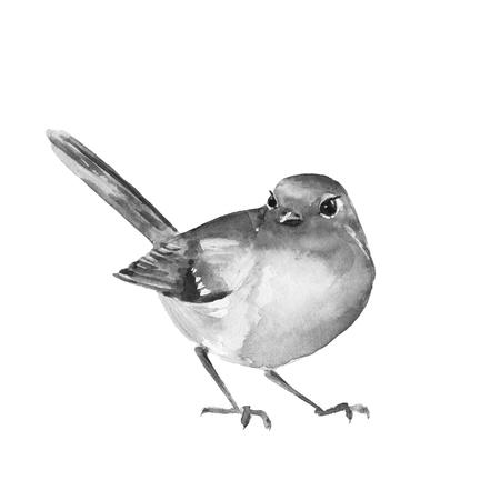 ornithology: Watercolor bird Robin. Black and white illustration. Isolated Stock Photo