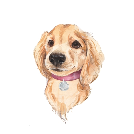 painted dog: Cute dog sketch isolated on white background. Hand painted. Watercolor illustration.