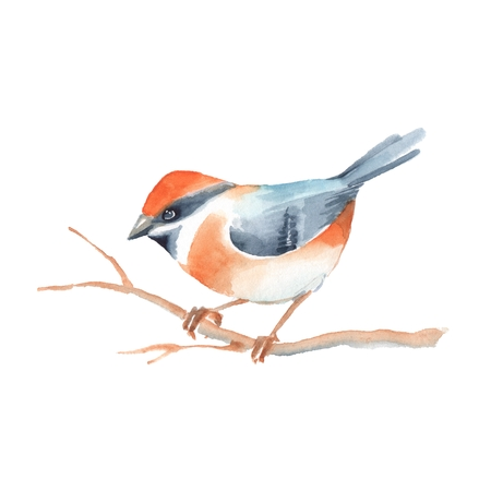 Bird on branch. Watercolor painting. Isolated on white