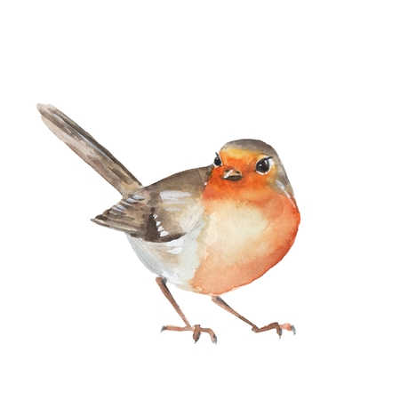 Waterverfvogel Robin. Kleurrijke illustratie. Op wit wordt geïsoleerd Stockfoto