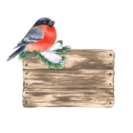 bullfinch: Wooden sign and bullfinch. Watercolor illustration.