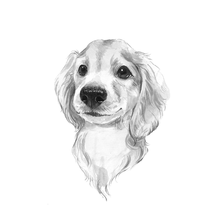 Cute dog sketch. Black and white watercolor illustration.