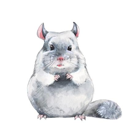Chinchilla. Watercolor illustration