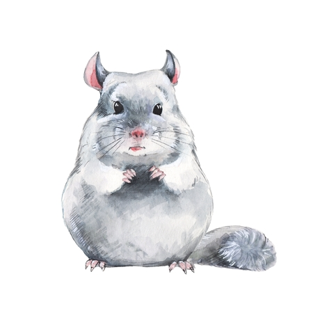 Chinchilla. Watercolor illustration