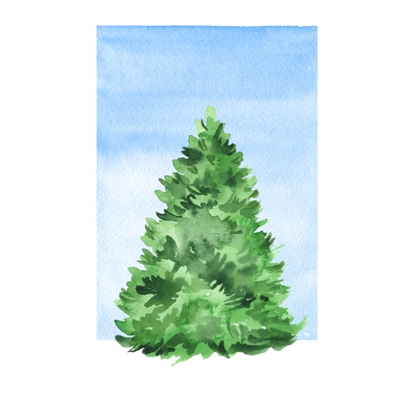 drawing trees: Fir tree. Watercolor illustration with blue background