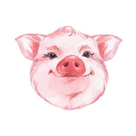 Funny pig. Cute watercolor animal face. Isolated on white