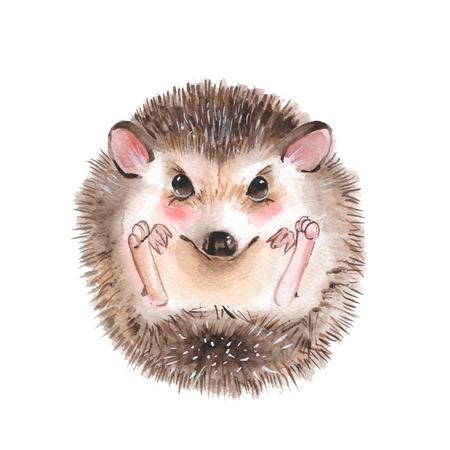 Cute hedgehog. Cartoon watercolor illustration