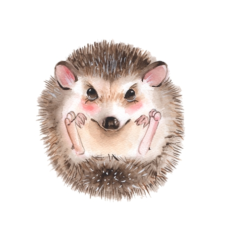 Cute hedgehog. Cartoon watercolor illustration