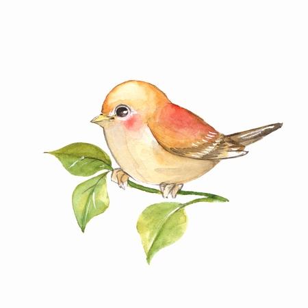 Bird on branch. Watercolor painting 写真素材