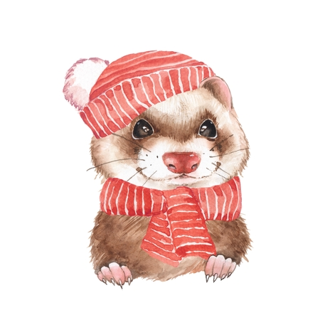 Cute ferret in red hat. Watercolor illustration
