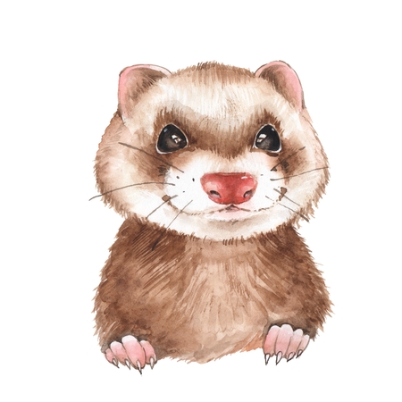 Cute watercolor ferret, isolated on white background