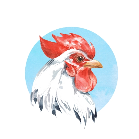 Rooster on blue background. Watercolor illustration