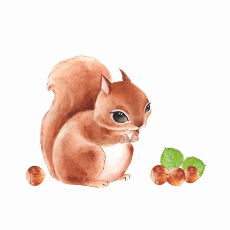 Squirrel and nuts, isolated on white background. Cute watercolor illustration