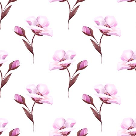 Fleurs roses sur blanc. Fond transparent botanique printemps