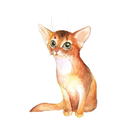Cute kitten, isolated on white. Cat watercolor illustration