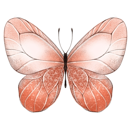 Beautiful pink butterfly. Isolated on white background