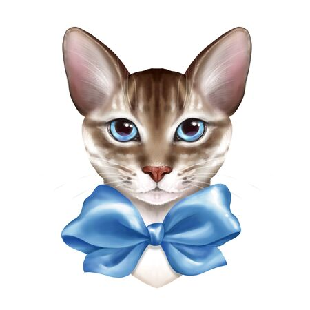 Cute cat with blue bow. Isolated on white