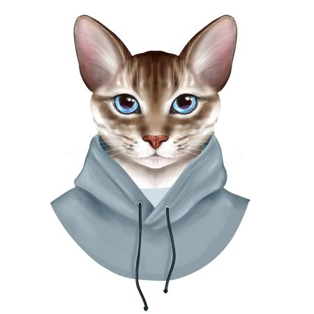 Dressed up cat. Cute digital illustration isolated on white