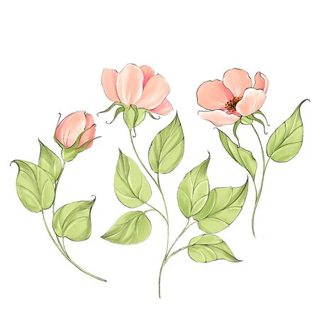 Pink delicate flowers isolated on white. Set for design